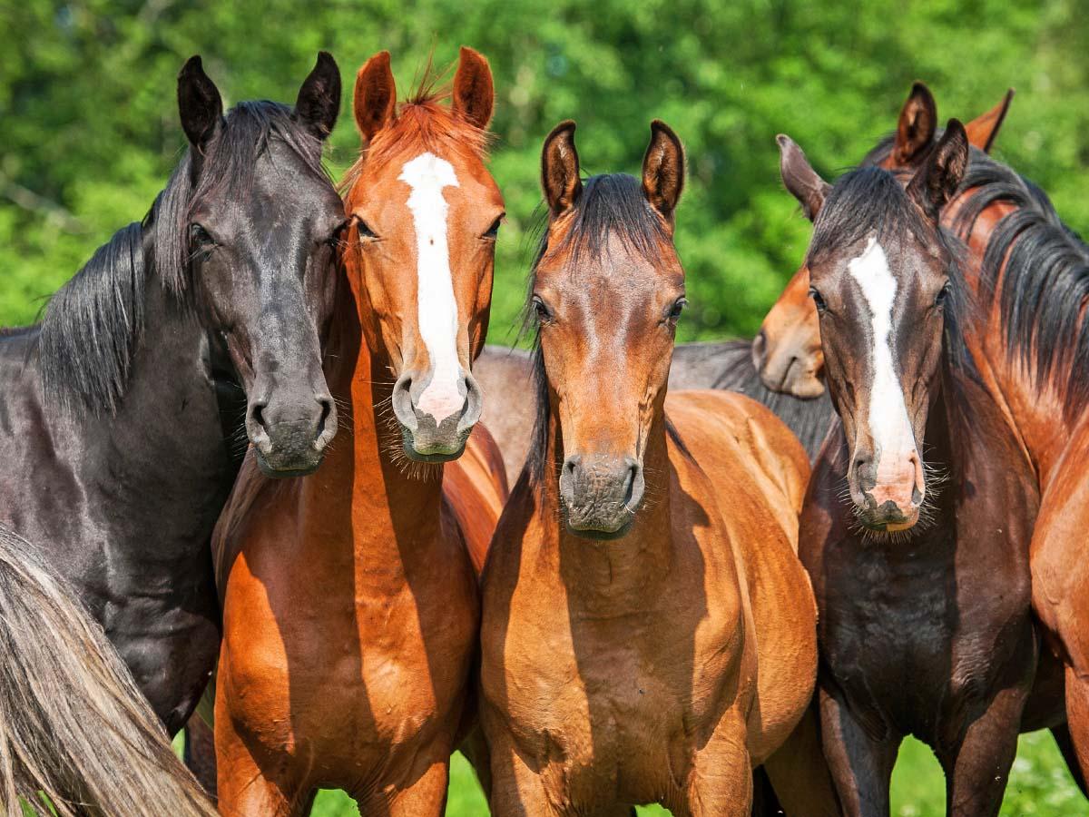 Horses for Sale at Public Auction